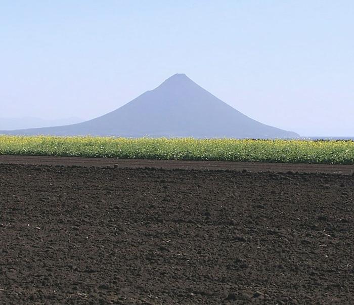 開聞岳が穏やかに見守る芋畑